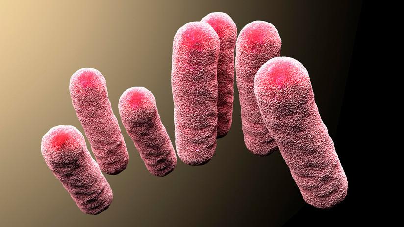 Hallan en esponjas de cocina un posible remedio contra bacterias resistentes a los antibióticos