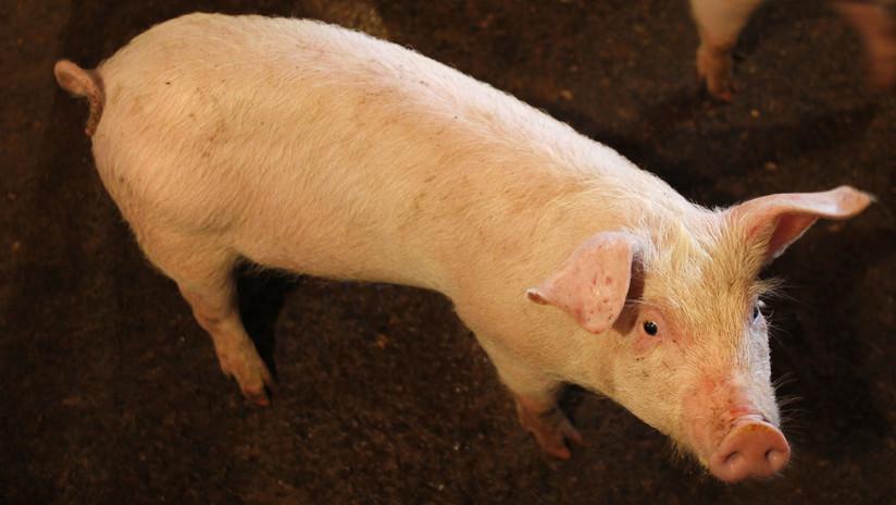 China suspende las importaciones de carne de cerdo de Canadá tras hallar certificados falsos