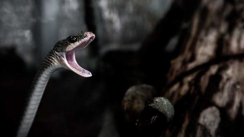 VIDEO: Una serpiente juega al 'tira y afloja' con un pescador para quedarse con su presa
