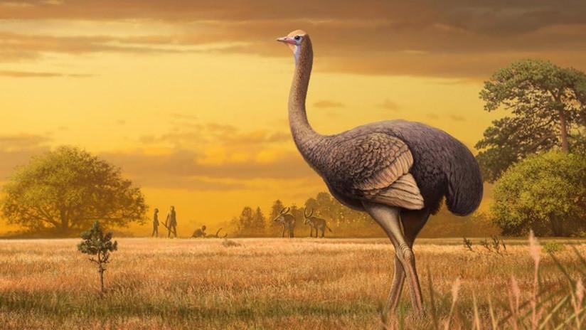 Hallan en Crimea un fósil de un ave gigante de 450 kilos y 3,5 metros de altura