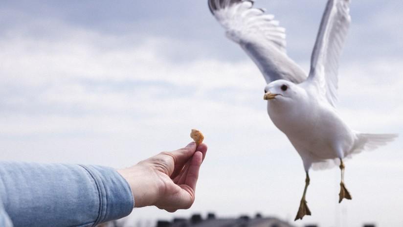 FOTOS: Un ave alimenta a su polluelo con la colilla de un cigarrillo en Florida