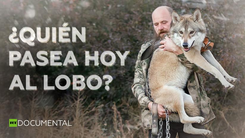 ¿Quién pasea hoy al lobo?