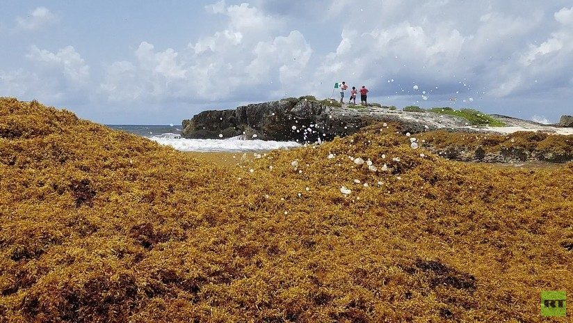 FOTOS: La gigantesca mancha de sargazo llega a las playas de México