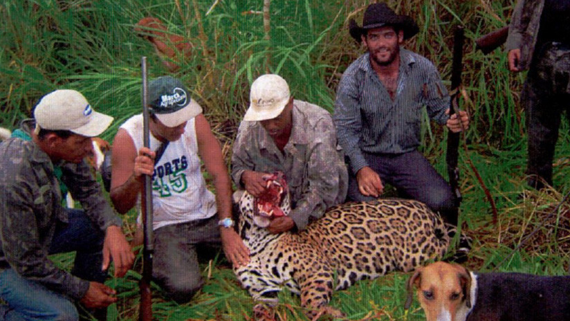 A juicio un cazador brasileño acusado de matar a más de 1.000 jaguares en 32 años