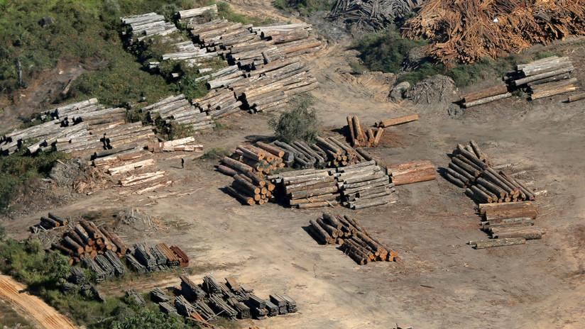 La deforestación en la Amazonía brasileña aumenta un 88%