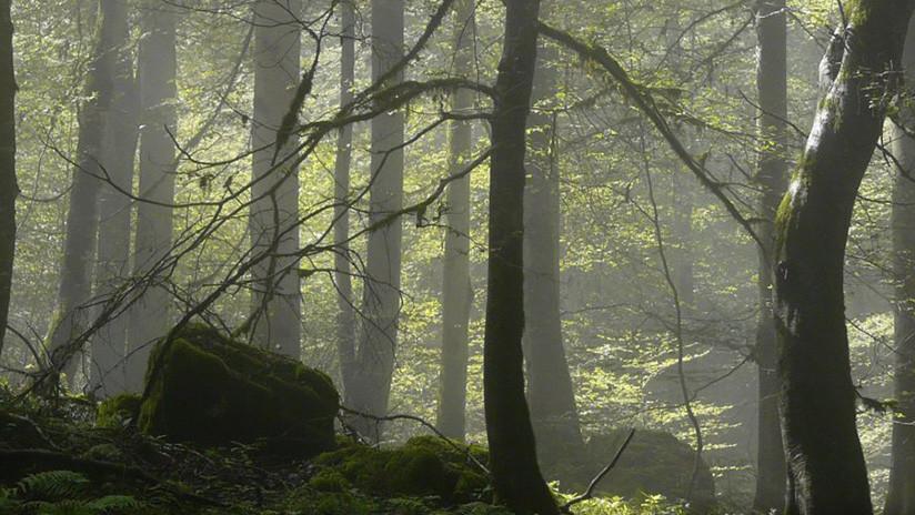Incluyen a los bosques del Caspio iraní en la lista de Patrimonio Mundial de la UNESCO