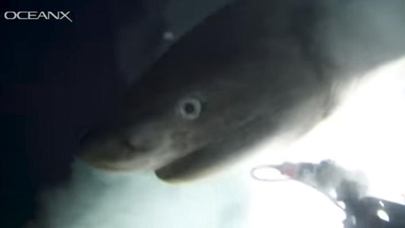 Histórico: Captan en aguas profundas tiburón desconocido