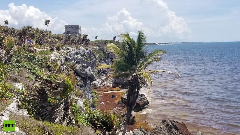 VIDEO, FOTOS: Tulum, la única ciudad maya a orillas del mar, enfrenta la invasión del sargazo