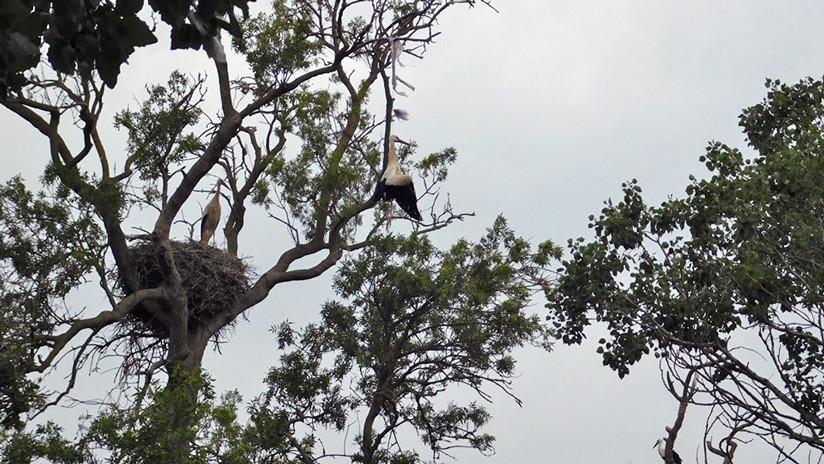 Muere una cigüeña ahogada por una bolsa de plástico en un parque natural en España