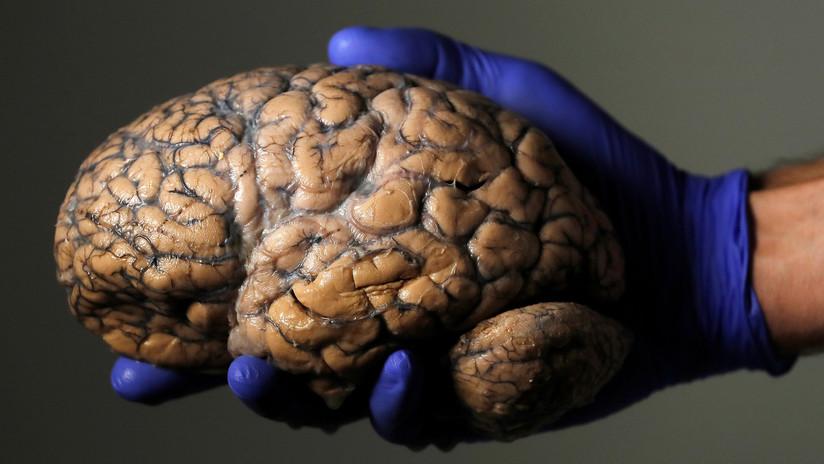 """La ciencia ya sabe cómo volver a la vida el cerebro de un humano muerto (pero el resultado podría ser una """"pesadilla perpetua"""")"""
