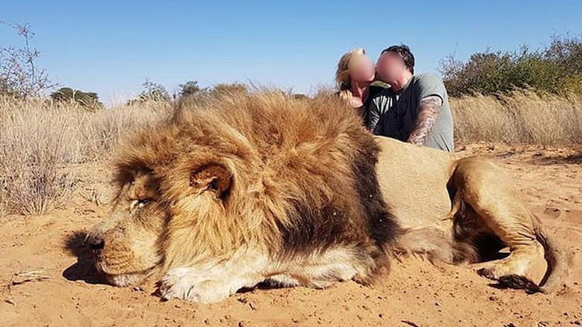FOTOS: Una pareja de cazadores fotografiada besándose tras matar a un león indefenso causa indignación entre conservacionistas