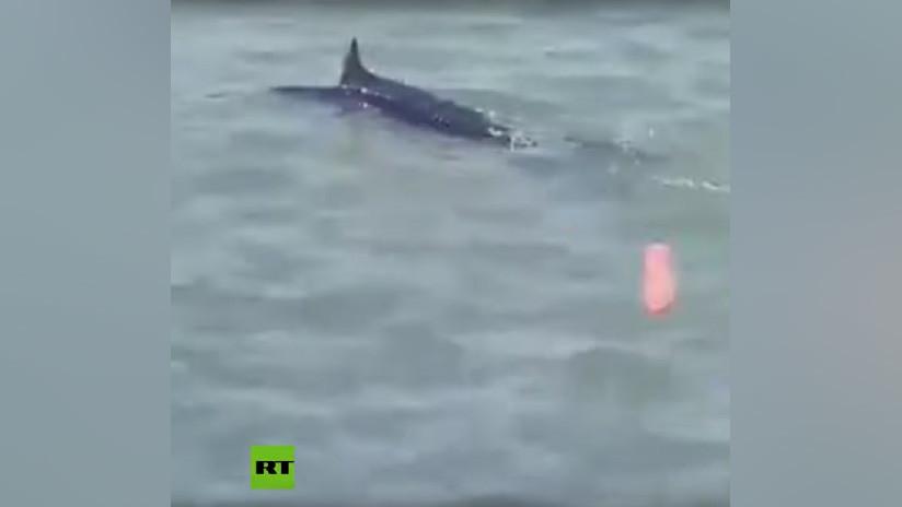 VIDEO: Un grupo de jóvenes se divierte golpeando a un pez espada hasta causarle la muerte en una playa de Grecia