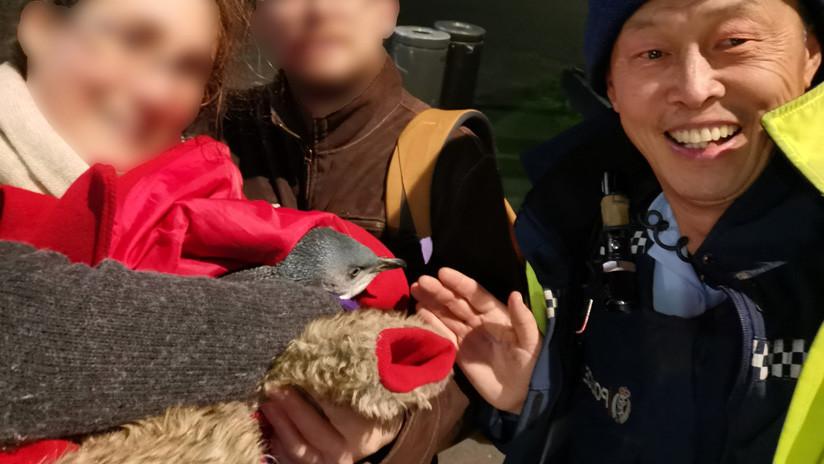 Dos pingüinos son 'detenidos' en Nueva Zelanda tras crearse un hogar debajo de una tienda de sushi