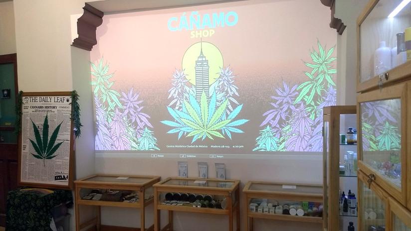 Así es el primer museo del cáñamo y la marihuana en México