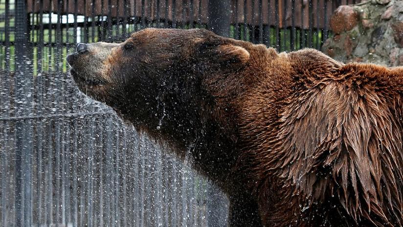 """""""Este oso tiene mejores vacaciones que yo"""": La foto del animal tomando un relajado baño de barro cautiva a la Red"""