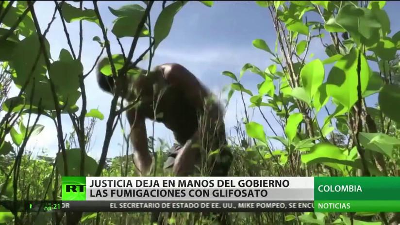 La Justicia de Colombia deja en manos del Gobierno la fumigación aérea de campos de coca con glifosato