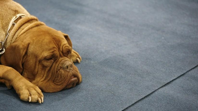 FOTO: Una perra camina 200 kilómetros buscando a la pareja que la rechazó