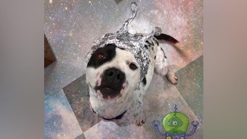 'Perros extraterrestres': un refugio de animales de Oklahoma saca ventaja de la fiebre por el Área 51