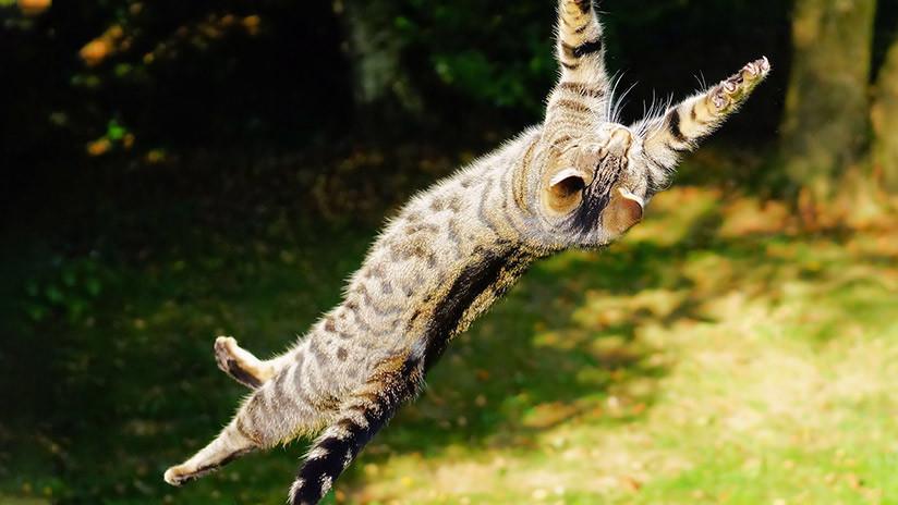 VIDEO: Una 'streamer' causa indignación al lanzar su gato por los aires en una transmisión en vivo