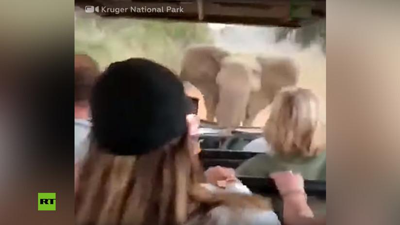 VIDEO: Un elefante enojado embiste contra un todoterreno lleno de turistas en Sudáfrica