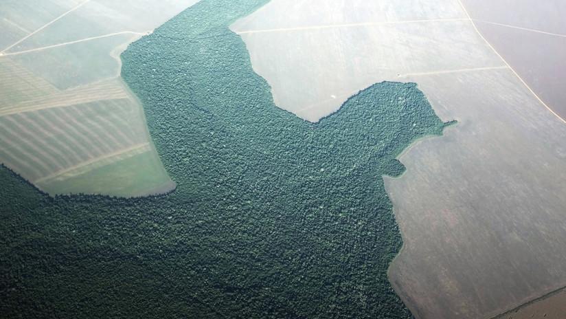 FOTO: Satélites de la NASA detectan cómo renace un bosque tropical brasileño que estaba desapareciendo