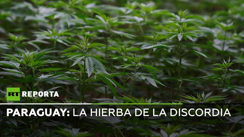 Hierba de la discordia: la batalla perpetua contra el cultivo de marihuana en Paraguay