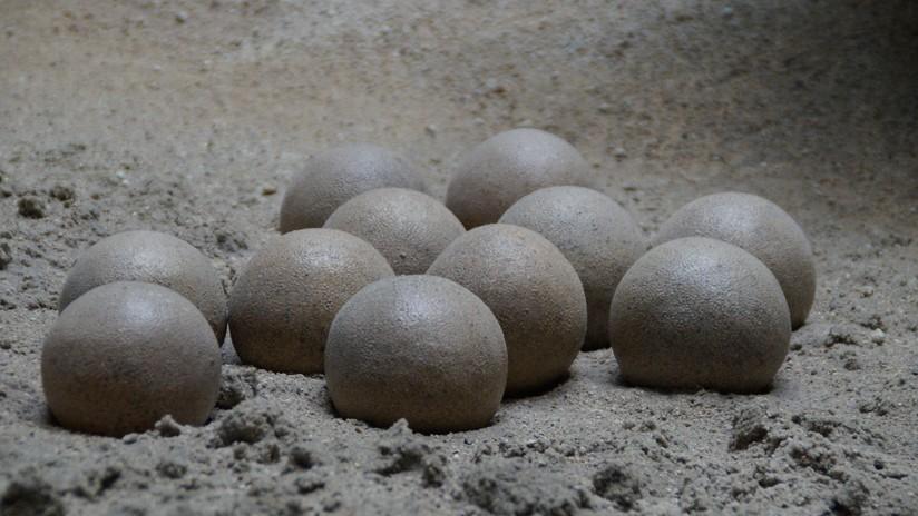 Un niño encuentra un nido de huevos de dinosaurio de 65 millones de años en China  5d3b03ece9180f1e538b456a