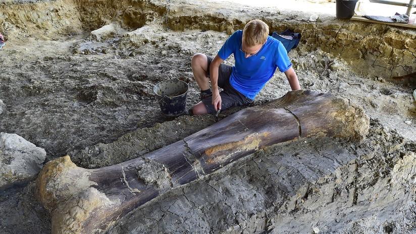 Francia: Un hueso de dos metros 'habla' sobre los dinosaurios de la era jurásica (FOTOS, VIDEO)