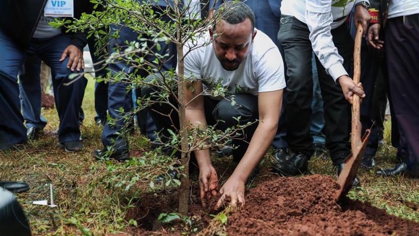 Etiopía planta 350 millones de árboles en un día para frenar el cambio climático