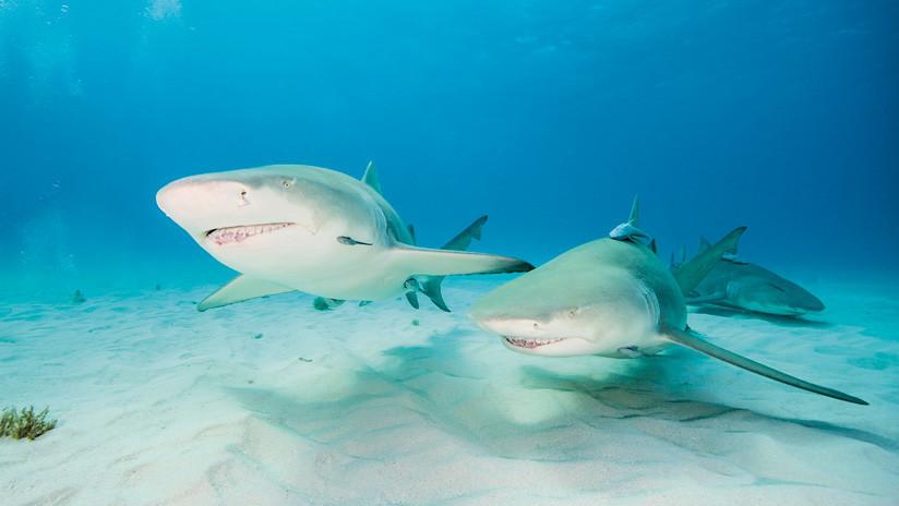 VIDEO: Un 'youtuber' pone a prueba el olfato de los tiburones utilizando su propia sangre como carnada