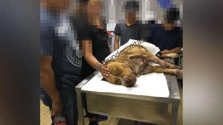 El pitbull de nombre Tiger murió debido a tres disparos de un policía de Ciudad de México.