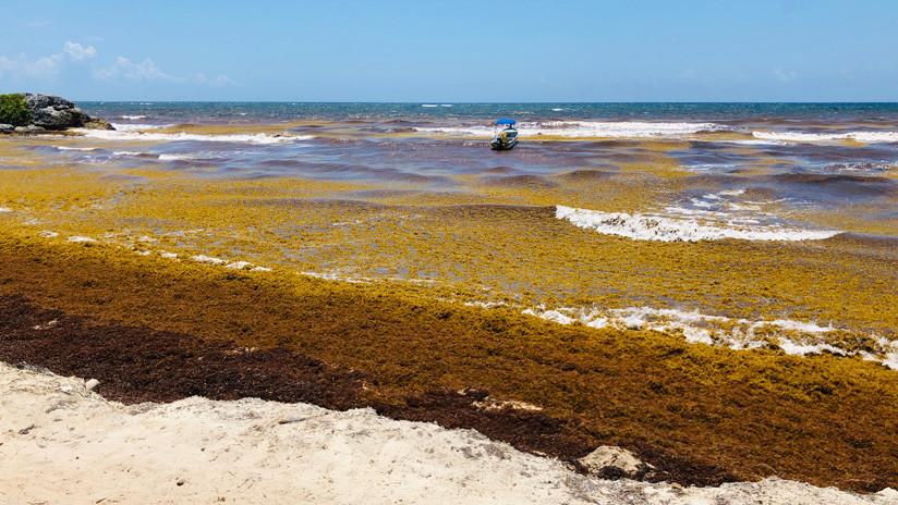 México informa que solo queda sargazo en tres playas de Quintana Roo