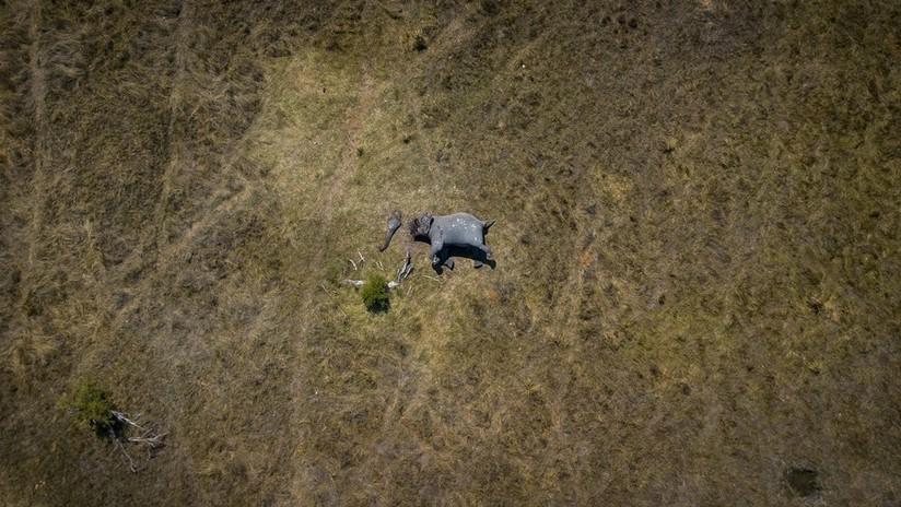La imagen aérea del cadáver mutilado de un elefante gana la votación en línea del Concurso Internacional de Fotoperiodismo Andréi Stenin