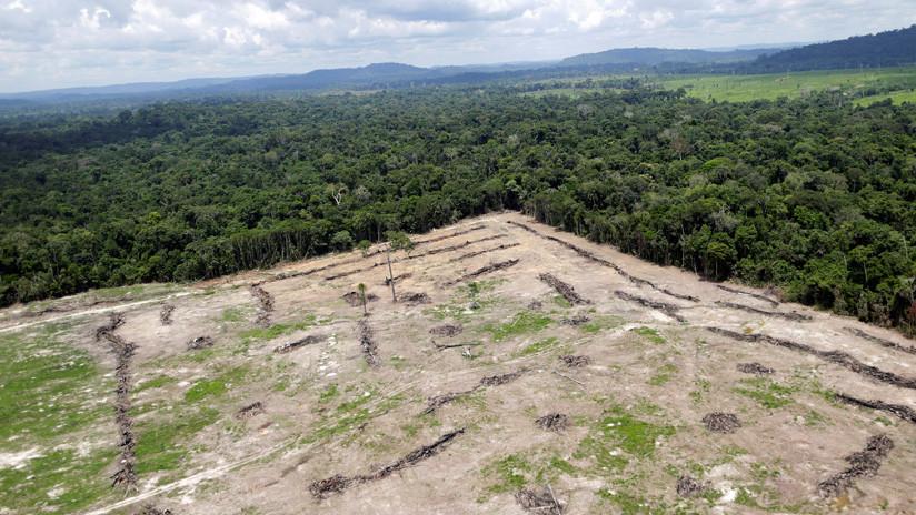 Brasil nombra a un militar como director interino del instituto que supervisa la deforestación en la Amazonía