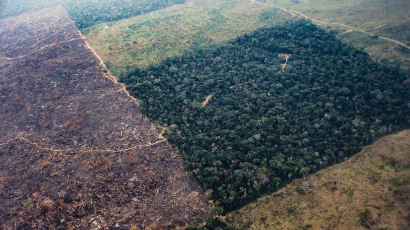 Confirman la alarmante deforestación de la Amazonía brasileña pese a las críticas de Bolsonaro