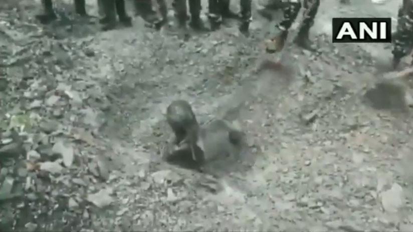 VIDEO: Un perro salva a un hombre sepultado por un deslizamiento de tierra