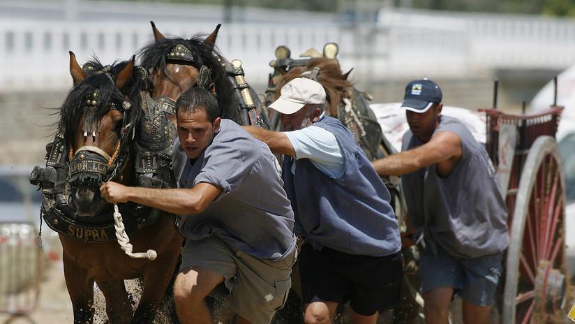 """VIDEO: Un caballo se desploma """"de agotamiento"""" durante una prueba de tiro y arrastre en España"""