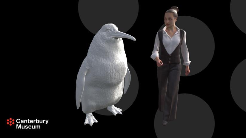 """Encuentran en Nueva Zelanda los restos de un """"pingüino monstruo"""" de la estatura de una persona adulta"""