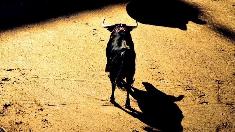 VIDEO: Un toro lanza a un joven por los aires en un espectaculo taurino en España
