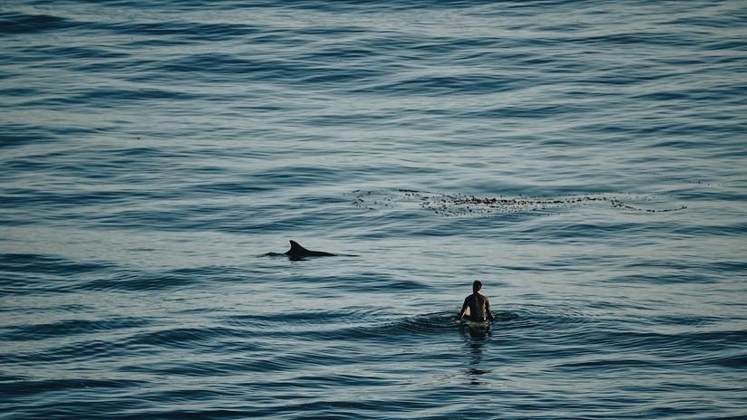 Un tiburón ataca a una niña de 9 años en una playa de EE.UU.