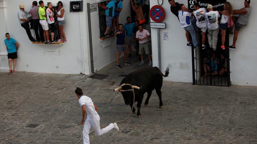 Un hombre muere tras recibir una cornada durante festejos taurinos en España (VIDEO)