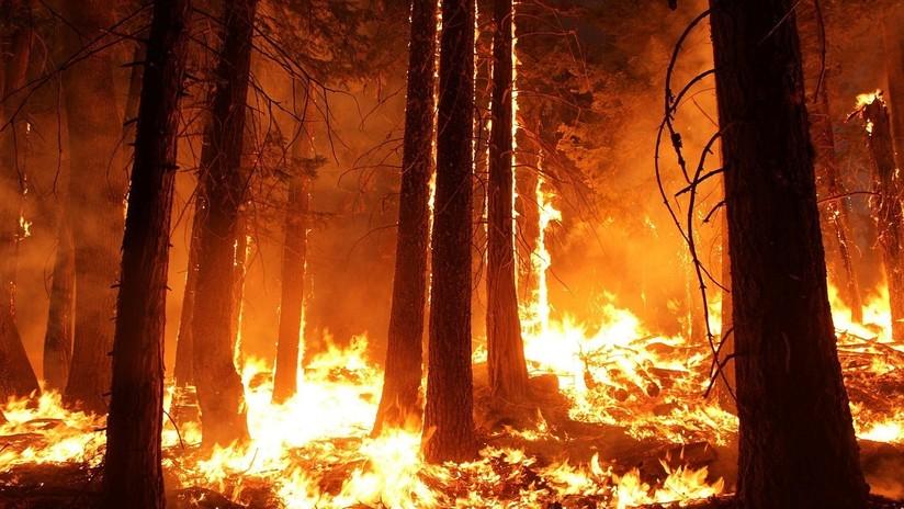 """""""Difícil de parar"""": Un incendio forestal en Bolivia consume 450.000 hectáreas de bosque en Santa Cruz"""
