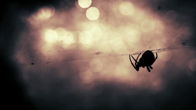 Estudio: Huracanes y tormentas impulsan la evolución de arañas más agresivas