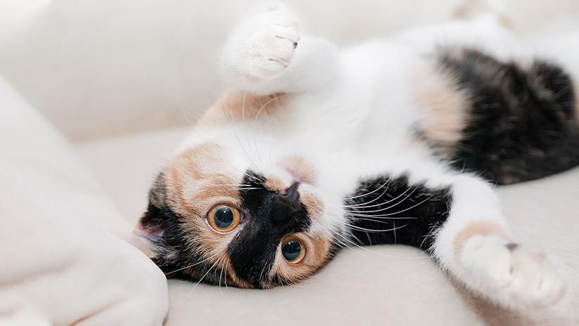 Científicos suizos desarrollan una vacuna para que los gatos no causen alergias en humanos