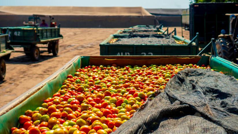 El largo camino de los tomateros mexicanos para llegar a un acuerdo comercial con EE.UU.