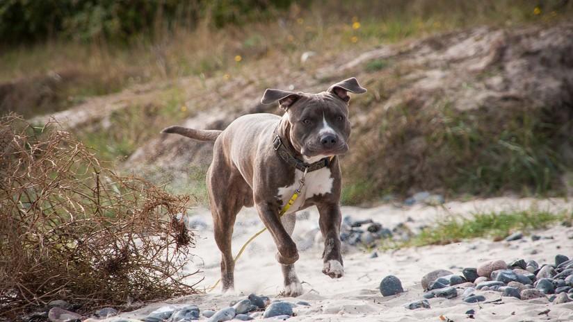 Un perro salva a su dueño de las fauces de un tiburón