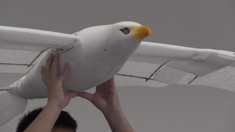 VIDEO: Presentan en China un dron en forma de gaviota