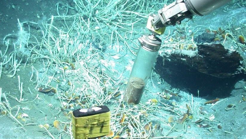 Hallan en el golfo de México un microbio que degrada petróleo en gases de efecto invernadero