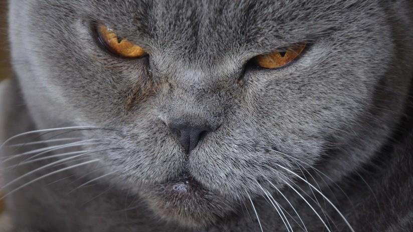 """Un ruso pone en venta por 230.000 dólares una gata que """"cura la resaca"""""""
