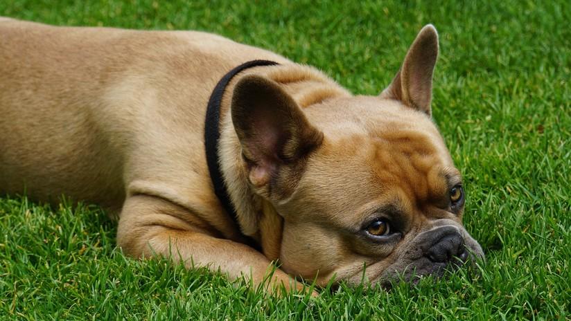 Un perro muere 15 minutos después de fallecer su dueño